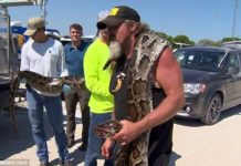 Image result for The biggest snake EVER caught in the Florida Everglades